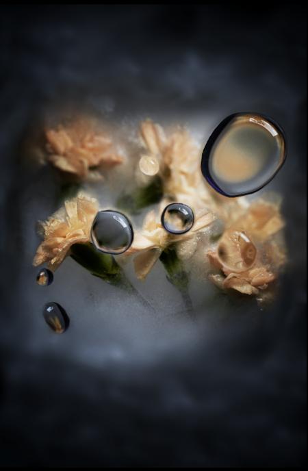 carnations, kunstfoto, linea høiby, limited edition, foto